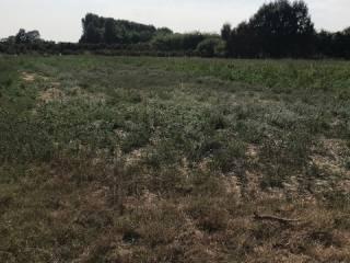 Foto - Terreno agricolo in Vendita a Magliano Alfieri