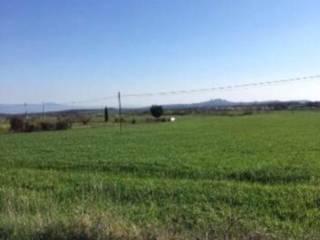 Foto - Terreno agricolo in Vendita a Bagnoregio