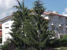 Appartamento Vendita Bossolasco
