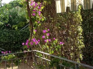 Foto - Bilocale via Benvenuto Cellini, Castiglioncello
