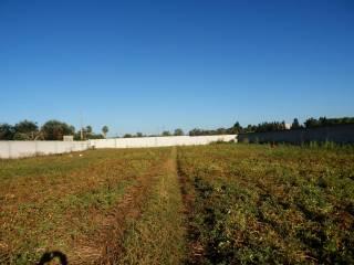 Foto - Terreno agricolo in Vendita a San Cesario di Lecce