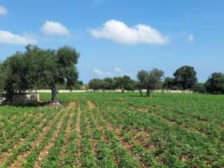 Foto - Terreno agricolo in Vendita a Polignano a Mare