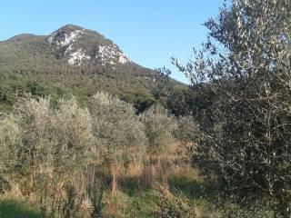 Foto - Terreno agricolo in Vendita a Sant'Oreste