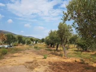 Foto - Terreno agricolo in Vendita a Ceriale
