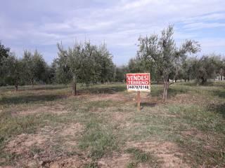 Foto - Terreno agricolo in Vendita a Teramo