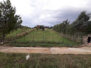 Foto - Terreno agricolo in Vendita a Grammichele