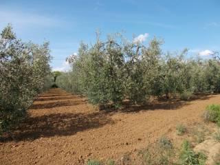 Foto - Terreno agricolo in Vendita a Cecina