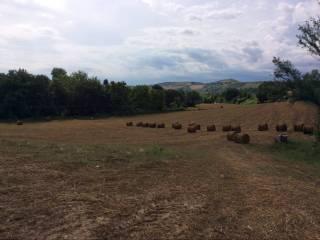 Foto - Terreno agricolo in Vendita a Città Sant'Angelo