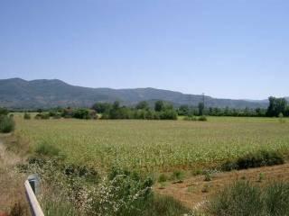 Foto - Terreno agricolo in Affitto a Arezzo