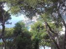 Appartamento Vendita Capri