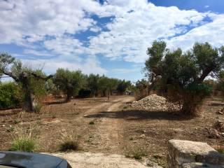 Foto - Terreno agricolo in Vendita a Alliste
