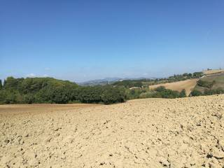 Foto - Terreno agricolo in Vendita a Torgiano
