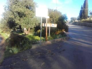 Foto - Terreno agricolo in Vendita a Ruffano