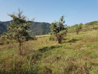 Foto - Terreno agricolo in Vendita a Belmonte Calabro
