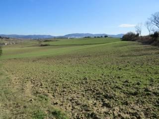 Foto - Terreno agricolo in Vendita a Castellina Marittima