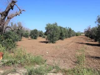 Foto - Terreno agricolo in Vendita a Alezio