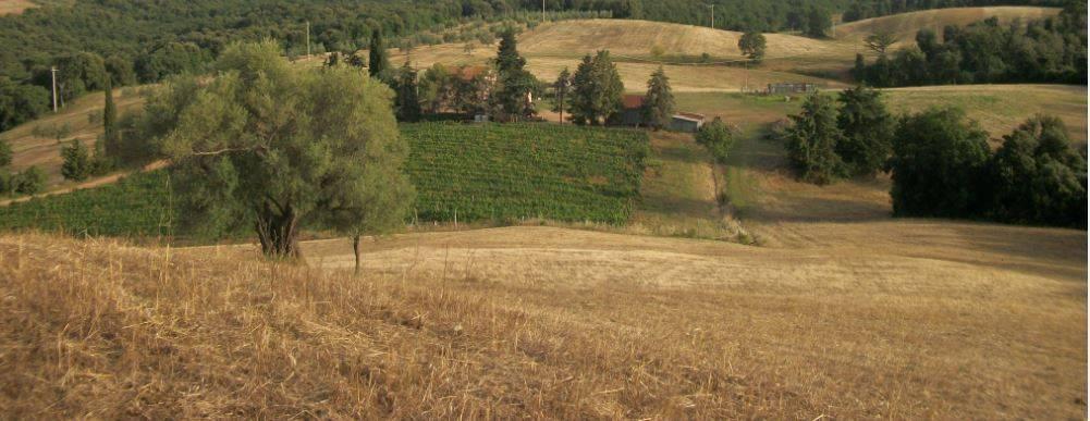 foto  Azienda agricola in Vendita a Massa Marittima