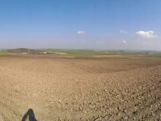Foto - Terreno agricolo in Vendita a Santa Croce di Magliano