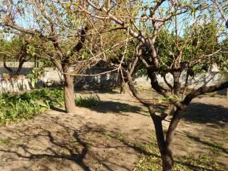 Foto - Terreno agricolo in Vendita a Camposano