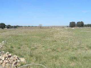 Foto - Terreno agricolo in Vendita a Monteiasi