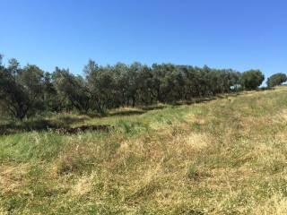 Foto - Terreno agricolo in Vendita a Montalcino