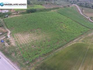 Foto - Terreno agricolo in Vendita a Campomarino