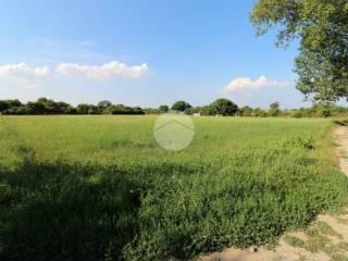 Foto - Terreno agricolo in Vendita a Bareggio