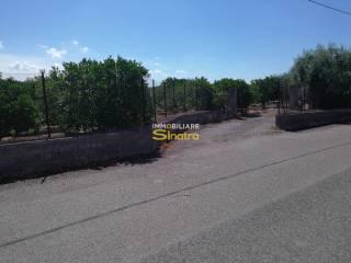 Foto - Terreno agricolo in Vendita a Santa Maria di Licodia