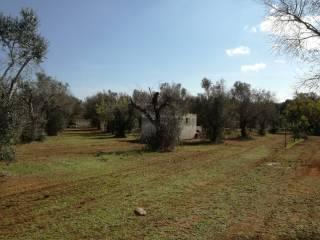 Foto - Terreno agricolo in Vendita a Nociglia
