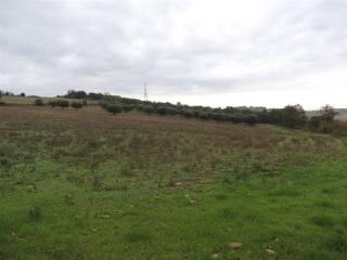 Foto - Terreno agricolo in Vendita a Monte Romano