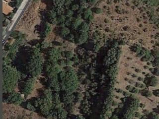 Foto - Terreno agricolo in Vendita a Motta Sant'Anastasia