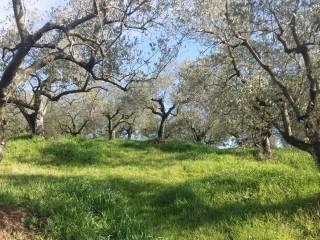 Foto - Terreno agricolo in Vendita a Paliano