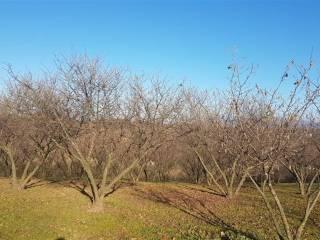 Foto - Terreno agricolo in Vendita a Palestrina