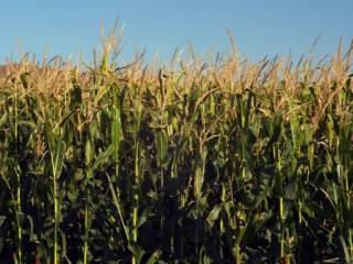 Foto - Terreno agricolo in Vendita a Gessate