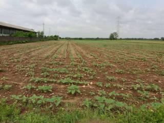 Foto - Terreno agricolo in Vendita a Buscate