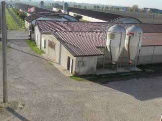 Foto - Casa indipendente 13459 mq, ottimo stato, Pradelle, Nogarole Rocca
