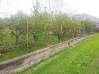 Foto - Terreno agricolo in Vendita a Carini
