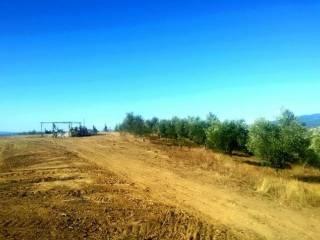 Foto - Terreno agricolo in Vendita a Scansano