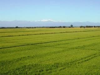 Foto - Terreno agricolo in Vendita a Rovasenda