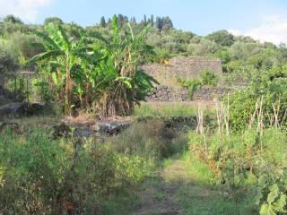 Foto - Terreno agricolo in Vendita a Valverde