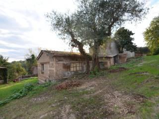 Foto - Rustico / Casale via Piedicolle 1, Collevecchio