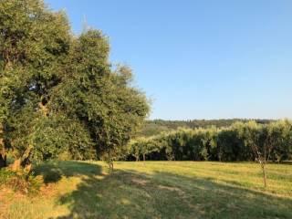 Foto - Terreno agricolo in Vendita a Verona