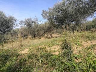 Foto - Terreno agricolo in Vendita a Montelibretti