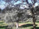 Terreno Vendita Pollina