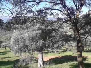 Foto - Terreno agricolo in Vendita a Pollina