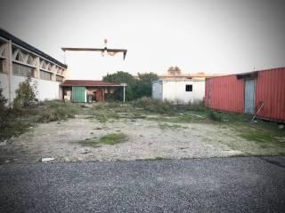 Immobile Affitto Collesalvetti