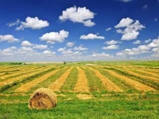 Foto - Terreno agricolo in Affitto a Vercelli