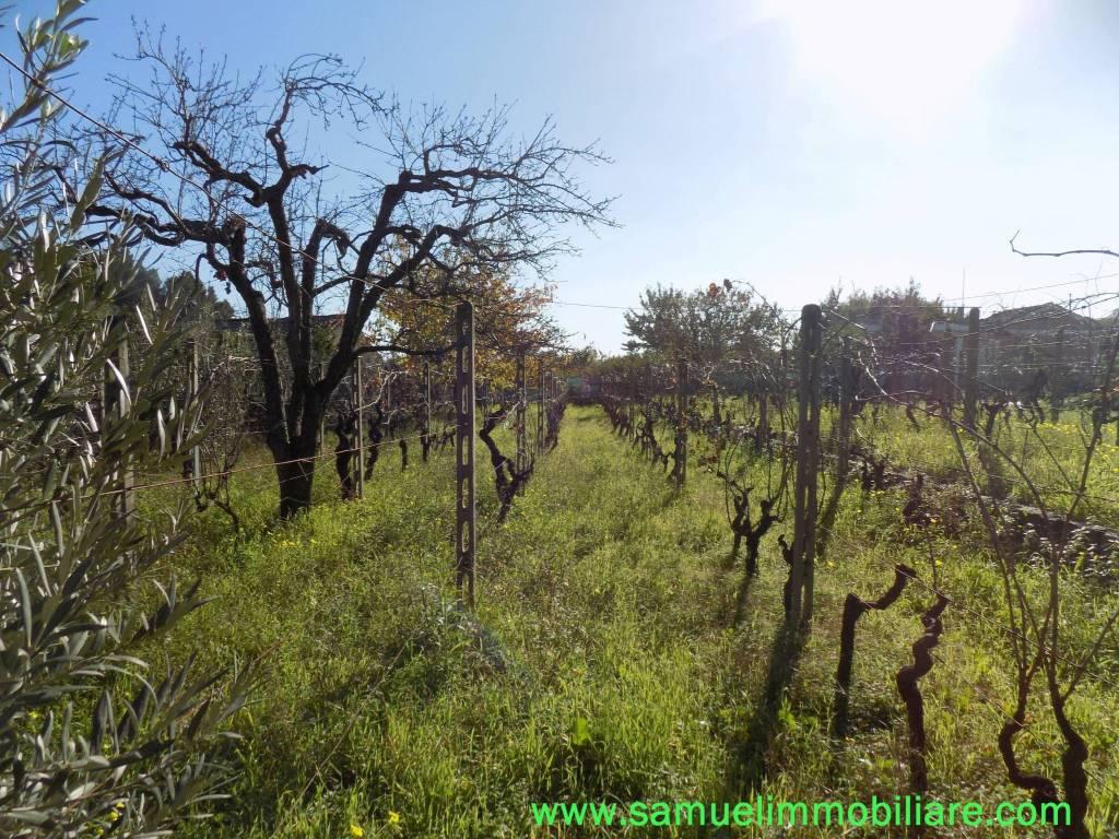 foto terreno Terreno agricolo in Vendita a Piedimonte Etneo