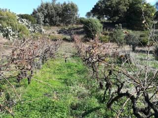 Foto - Terreno agricolo in Vendita a Portoscuso
