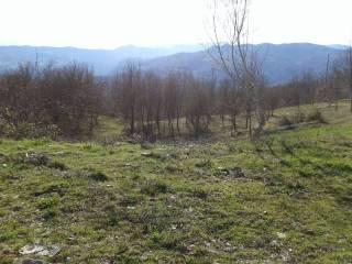 Foto - Terreno agricolo in Vendita a Solignano